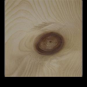 Holzarten Zirbe